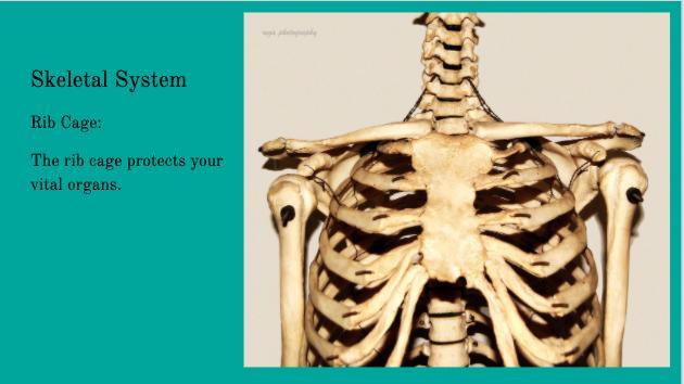 skeletal system picture