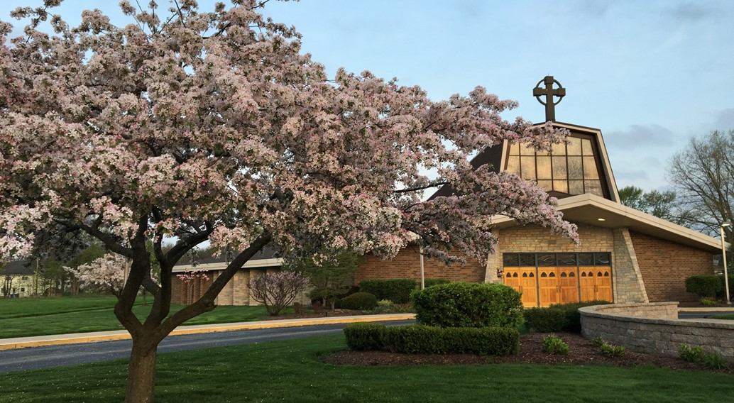 St. brendan Church in spring with cherry blossom in bloom on a blue sky day